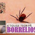 6 Tidlige Tegn på Borreliose
