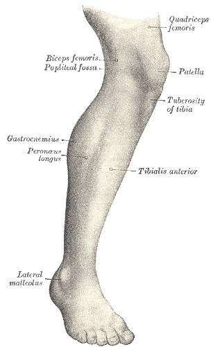 Tuberositas tibia - Foto: Wikimedia Commons