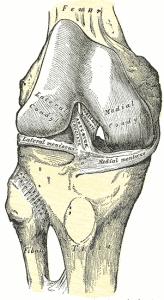 Kne anatomi