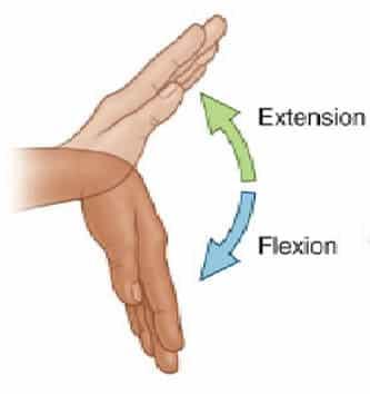 Håndledd fleksjon og ekstensjon