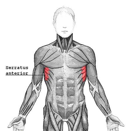 Serratus anterior myalgi - foto av wikimedia