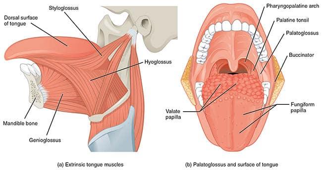 Sår på tunga vondt i halsen
