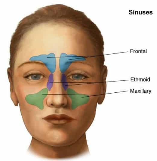 Bihulebetennelse som årsak til vondt i øyet - Foto Wiki