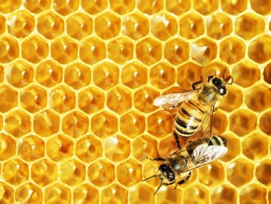 honning 2