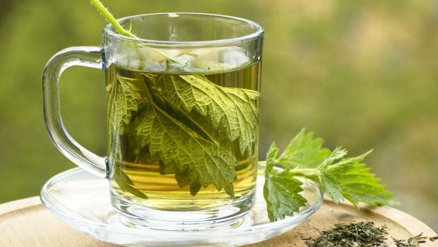 te på brennesle